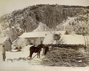 Vedkøyring med hest og slede på Kvestad i nedre Suldal ein vinterdag i 1888.