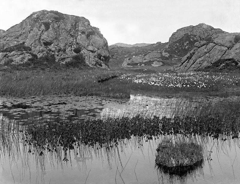 Et tjern med vannliljer og myrull.Fotograf: Thea Larsen, MHB-F.007821, Karmsund folkemuseums fotosamling.