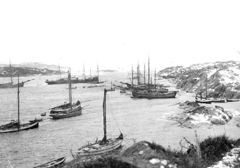 Fotografiet viser fiskebåter som ligger for anker i en bukt, sannsynligvis driver de vårsildefiske på Kvitsøy. Her ligger også jekter lastet med tønner og et dampskip fortøyet. Foto: Stavanger Sjøfartsmuseum, ST.S 1983-057-0216.